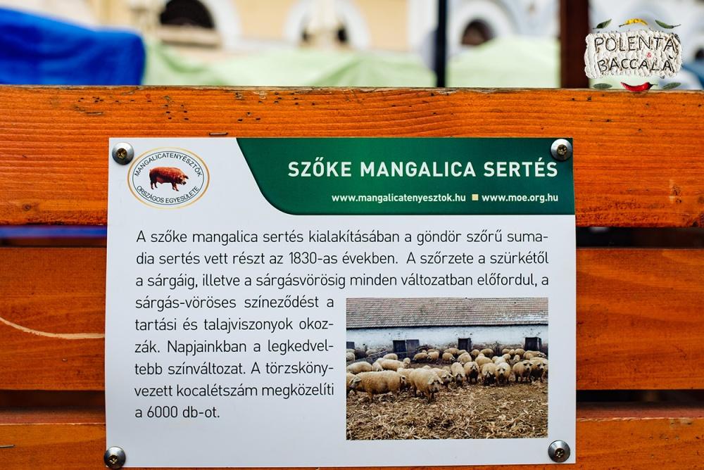 mangalica_fesztival_2018 (15)