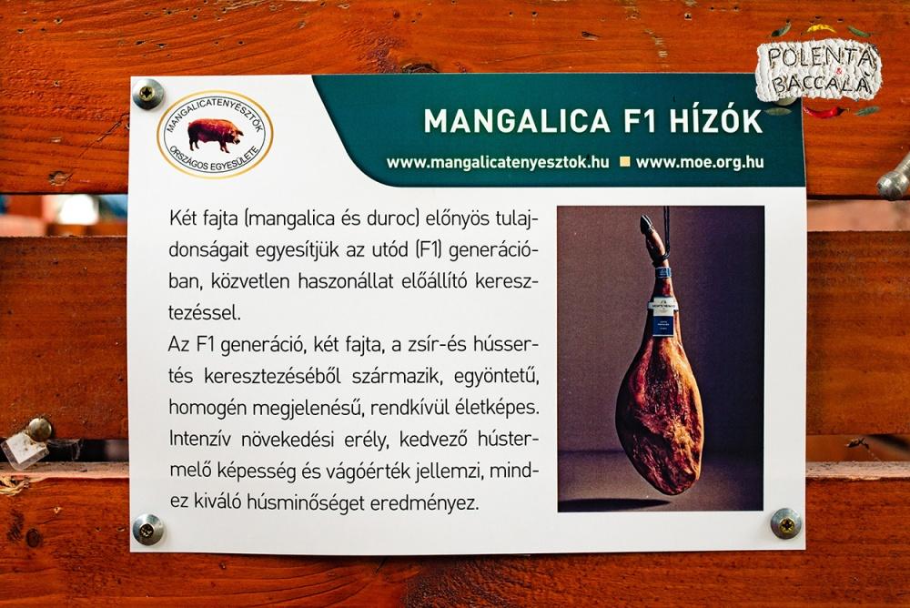 mangalica_fesztival_2018 (23)
